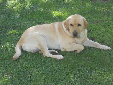 ... Puppies | Pretoria North | Dogs and Puppies | Junk Mail Classifieds