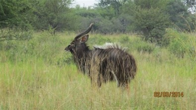 500ha Bushveld GAME FARM for R12mil