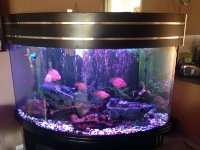 Custom corner fish tank urgent sale boksburg fish for Corner fish tank for sale