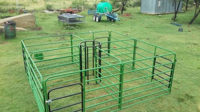 Sheep for sale in eastern cape with images