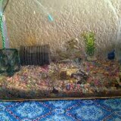 Small cold water fish tank roodepoort fish and for Cold water fish tanks
