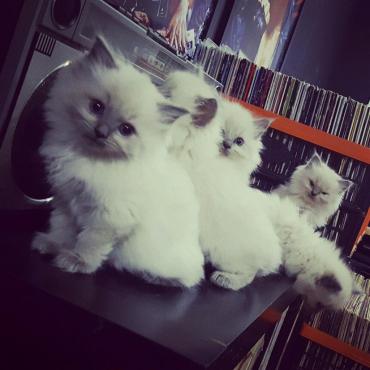 Cats For Sale Pretoria