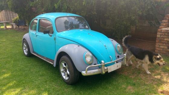 3 vw beetles for sale springs volkswagen 64917138 junk mail classifieds. Black Bedroom Furniture Sets. Home Design Ideas