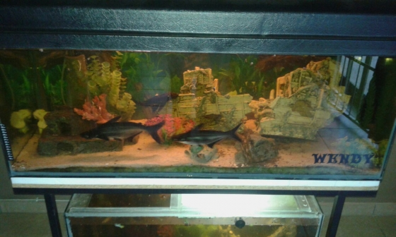 2x fish tanks for sale west rand fish and aquariums for Fish aquariums for sale