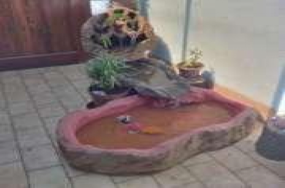 Beautiful water feature koi pond for sale comes with for Koi ponds durban
