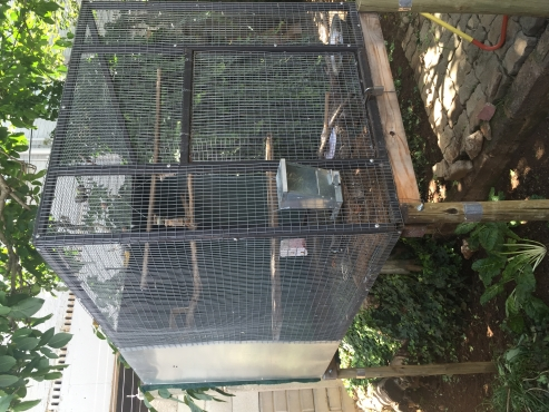 Suspended Aviary With Nest Box East Rand Birds And