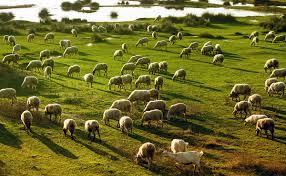 Theo's Livestock