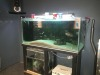 Massive fish tank for sale, BA