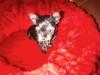 DOG BEDS/CUSHIONS  - DUAL PURPOSE / REVERSIBLE