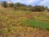 A Vacant land for Sale in Zaka