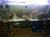 Marine Fish Tank for sale, COM