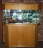 4 ft Fish Tank / Vistenk