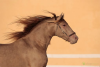 Buying or Selling a Horse