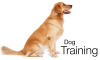 Dog Training Boksburg Kennels