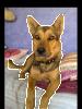 Smokie - licious Woof Pet Parlour