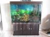 Fish Tank with Fresh Water Cra