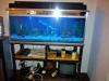 4 foot tropical fish tank