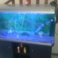 300L Fresh Water Aquarium