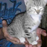 Lovable, bottle raised kittens for sale