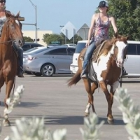 CClus Dry Cross - 15.0HH, 2004' Sorrel/Overo APHA Mare $2,500 For Sale.
