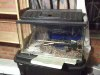 60l fish tank complete for sale