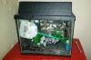 Complete Starter Fish Tank For