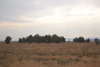 GOLDEN VALLEY MAGALIESBURG +- 22 HECTARE UN-DEVELOPED LAND
