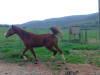ARABIAN RAIN HORSE: For sale,7