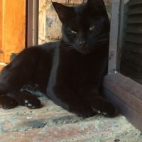 Female Black Cat to Good Home