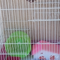 hamster/mice cages for sale