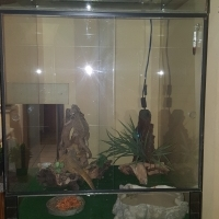 Large Cage and all extras included