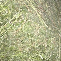 Great A Fresh green Lucerne Hay 8x4x3
