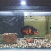 4 foot fish tank with assesories