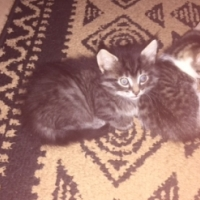 LOVELY PLAYFUL KITTENS FOR SALE TO GOOD HOMES