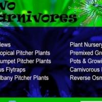 ** Carnivorous Plants - Venus Flytraps,Sundews,Sarracenias,Nepenthes & more! **