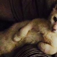 Lost kitten from Faerie Glen