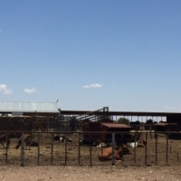 ON Auction - Grazing Farms (771 ha) and Equipment, Stella/Vryburg - 26 October 2016