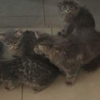 Adorable kittens to good homes