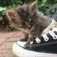 2 Cute fluffy, playfull kittens