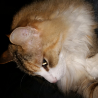 2 beautiful cats looking for new home