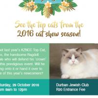 KZN Top Cat! Experience the best felines shown in KZN in 2016!
