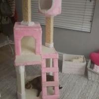Brand new cat condo , Cat tree,Cat scratching post