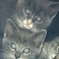 Kittens (R120.00)