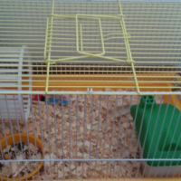 Hamster cages and fish tank