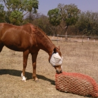 slow feeder hay nets for horses for sale