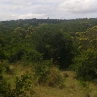 vacant land 44 hectares between Kei Mouth and Morgans Bay ideal for off the grid living sad seller