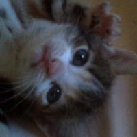 4 lovely kittens,