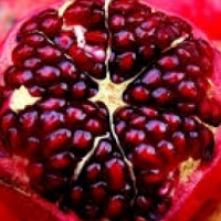 Opportunity in the POMEGRENADE business
