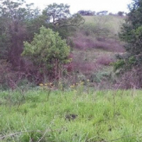 Contact for Price Agricultural land for lease in Gillitts  Agricultural land for lease in Gillitts