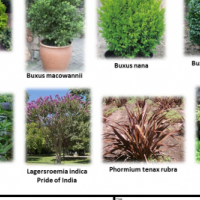 SPECIALS ON GROUND COVERS, GRASSES, ALOES, TREES